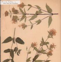 Image of Botany - 95.0003.627