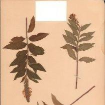 Image of Botany - 95.0013.637