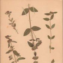 Image of Botany - 95.0022.646