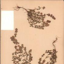 Image of Botany - 95.0039.663
