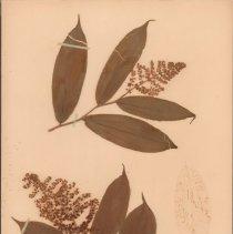 Image of Botany - 95.0051.675