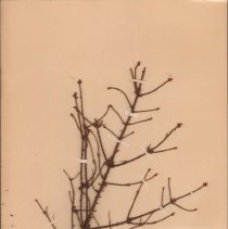 Image of Botany - 95.0070.694