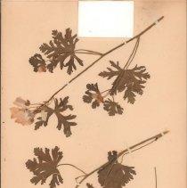 Image of Botany - 95.0091.714