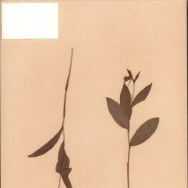 Image of Botany - 95.0143.766