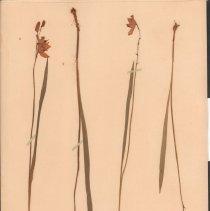 Image of Botany - 95.0148.771
