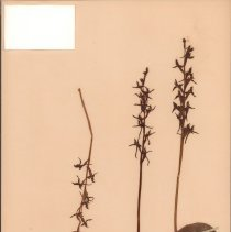 Image of Botany - 95.0159.782