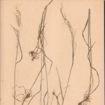 Image of Botany - 95.0239.862