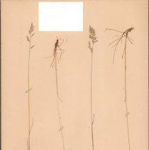 Image of Botany - 95.0270.893