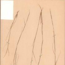 Image of Botany - 95.0242.865
