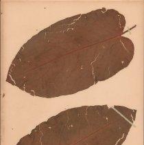 Image of Botany - 95.0301.924