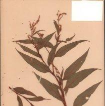 Image of Botany - 95.0312.935
