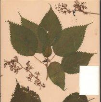 Image of Botany - 95.0322.1174
