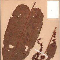 Image of Botany - 95.0331.953