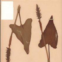 Image of Botany - 95.0332.954