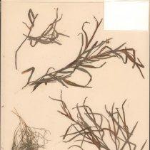 Image of Botany - 95.0334.956