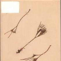 Image of Botany - 95.0341.963