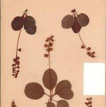 Image of Botany - 95.0347.969