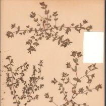 Image of Botany - 95.0402.1025