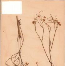 Image of Botany - 95.0426.1049