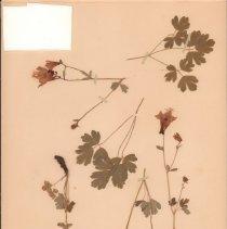 Image of Botany - 95.0438.1061