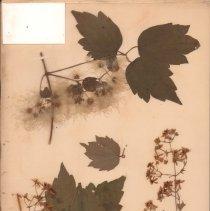 Image of Botany - 95.0443.1066
