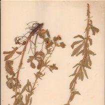 Image of Botany - 95.0473.1096