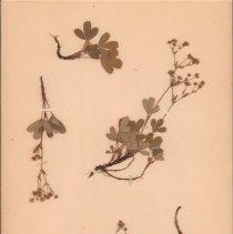 Image of Botany - 95.0477.1100