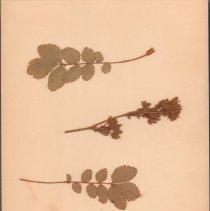 Image of Botany - 95.0489.1112