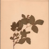 Image of Botany - 95.0494.1117