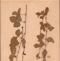 Image of Botany - 95.0511.1134