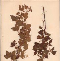 Image of Botany - 95.0519.1142