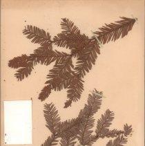 Image of Botany - 95.0521.1144