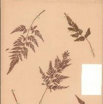 Image of Botany - 95.0643.1268