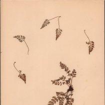 Image of Botany - 95.0705.1330
