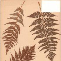 Image of Botany - 95.0765.1390
