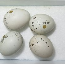 Image of Eggs - 79.219.69