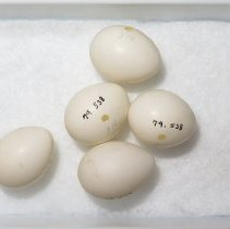 Image of Eggs - 79.538.206