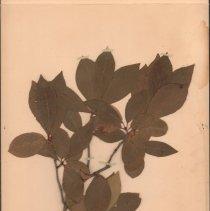 Image of Botany - 95.0582.1207