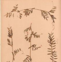Image of Botany - 95.0773.1398