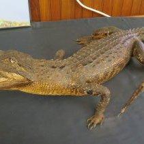 Image of Reptiles - 15.0098.98