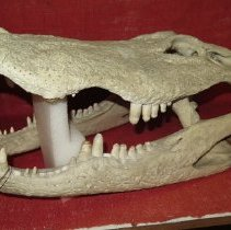 Image of Reptiles - 15.0099.99