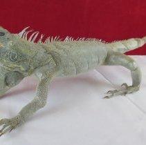 Image of Reptiles - 15.0100.100
