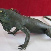 Image of Reptiles - 15.0101.101