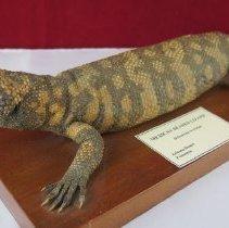 Image of Reptiles - 15.0102.102