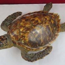 Image of Reptiles - 15.0103.103