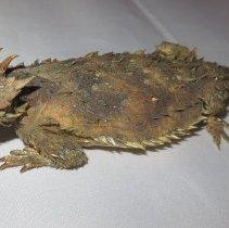 Image of Reptiles - 15.0105.105