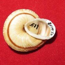 Image of Invertebrates - 93.0118.118