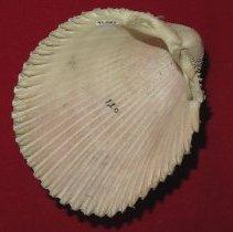 Image of Invertebrates - 93.0122.122