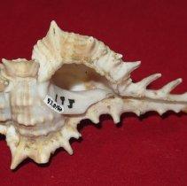 Image of Invertebrates - 93.0192.192