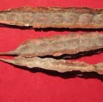 Image of Unknown specimen